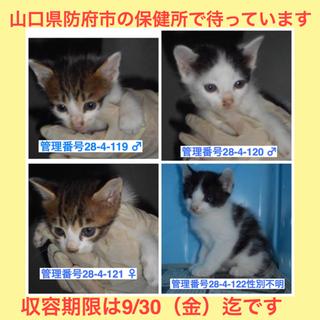 かわいい子猫を家族に迎えてください