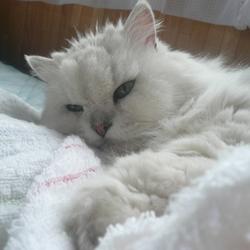 寝てばっかりだね~~(=^..^=)ミャー