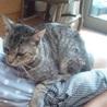 ✤奈良市保健所から委託譲渡で迎えたトトくん