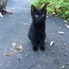 里親様募集中!迷い子猫(黒猫)
