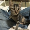 三ヶ月の人懐っこい猫です!