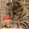2か月のやんちゃな子猫