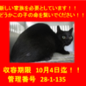 期限10月4日迄!!イケメンの黒猫ちゃんです☆