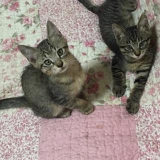 3匹の子猫を家族に
