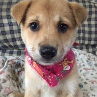 垂れ耳のプリテイー仔犬ちゃん