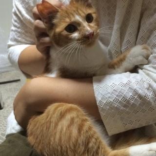 甘えんぼの茶白猫ちゃん