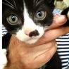 子猫が5匹産まれました