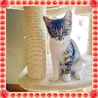 高速道路から救出された子猫 先住猫OK