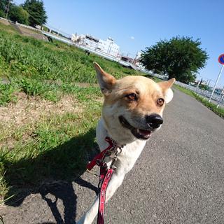 キラッキラの大きな瞳が印象的な小さめミックス犬