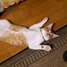 ありえないほどの無防備で寝る姿がかわいいです(*´ω`)