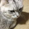 野良猫のTNRについて
