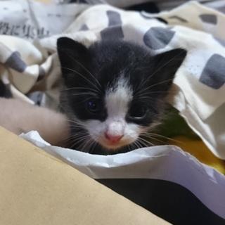 子猫を貰ってください