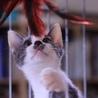 チョビヒゲ柄がお笑い系?イケメンボーイ猫ペースケ サムネイル7
