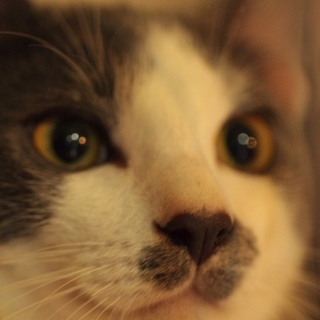 チョビヒゲ柄がお笑い系?イケメンボーイ猫ペースケ