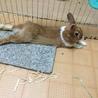 ミニウサギ パルくん(仮) サムネイル7