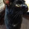 おっとり穏やかな黒猫クロロくん サムネイル2