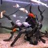 熱帯魚数種