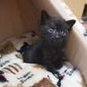 可愛い5兄妹黒猫子猫女の子♪