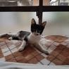 【子猫】シガちゃんの里親様募集中