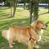 新しい飼い主探しています。