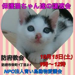 保護猫ちゃん達の譲渡会