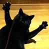 1歳半 元気な黒猫男の子です