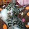 明石公園 譲渡会 可愛い2ヶ月子猫