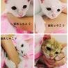 名古屋 4匹子猫の里親様募集