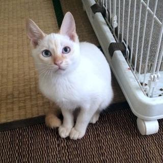 薄いブルーの瞳 カプチーノ色のチーノ君
