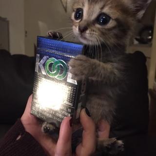 生後1ヶ月~子猫♀~