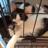わんぱく坊主な白黒子猫の白玉くん!! サムネイル6