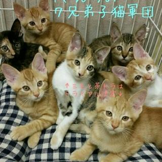 代理掲載・T家の子猫軍団7兄弟