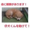 命の期限は一週間!!生後1ヶ月の仔犬くんを助けて!