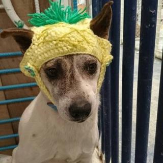 保健所引き取り帽子の似合うリンゴちゃん
