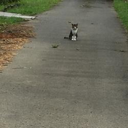 野良猫さん