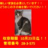 期限10月23日迄!上品な顔立ちの三毛ちゃん☆