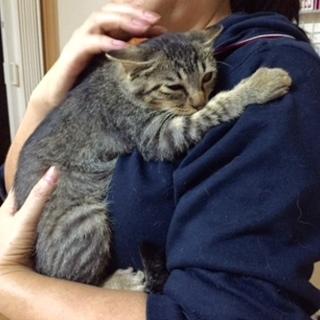 抱っこ大好き!飼いやすい子猫です!
