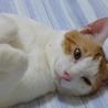 天然系イケメン男子♪とてもやさしいマーチ 2歳 サムネイル3