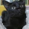 黒猫の可愛い女の子