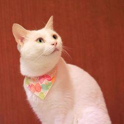 アニマルトレーナーも参加 猫のなんでも相談会(参加無料、予約不要)