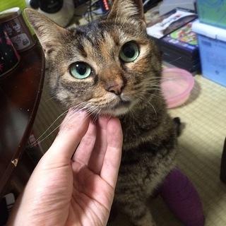 まきまきちゃん:交通事故にあった地域猫を保護