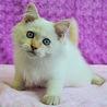 完璧美猫★純くん