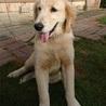 飼い主を探しています。生後約6ヵ月