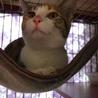 卒業猫のケイちゃん