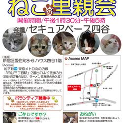 10月22日(土)・23日(日)地域猫から社会猫へ・猫の生きる権利確認連絡協議会 四谷里親会