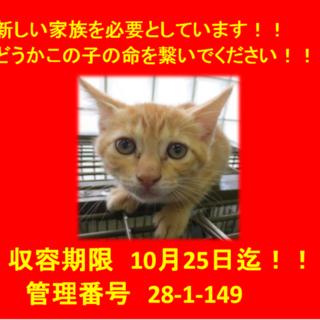 期限10月25日迄!可愛い子猫です(*´▽`*)⑥