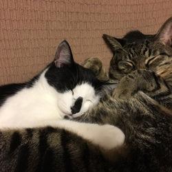 うちに保護猫が!