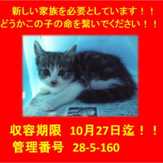 期限10月27日迄!お目目クリクリ子猫ちゃん☆