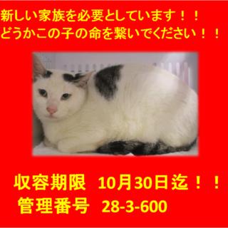 期限10月30日迄!可愛い眉猫ちゃんです☆