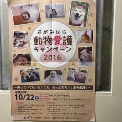 さがみはら動物愛護キャンペーン2016